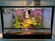 Gecko mit Terrarium und sämtlichem