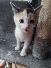 Katzenbaby nur eine Mädchen ist