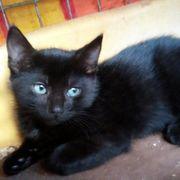 Katzenbub Angel sucht seine Menschen