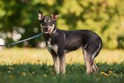 Hundekind Mia sucht ein Zuhause