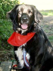 RAVENCLAW sucht liebevolle hundeerfahrene Menschen