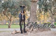 Noveleta möchte ihre Illusion zurück