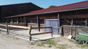 Freie Pferdebox in kleinem Offenstall