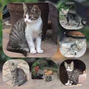 Baby Kater und Katze suchen