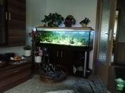 Aquarium mit Unterschrank zu verk