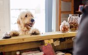 Hundetagesbetreuung und Hundepension Dog Daycare