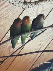 süße vögel ab zu geben