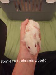4 Ratten Suchen neues Liebevolles