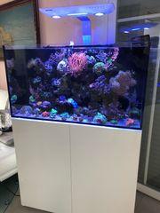 Meerwasseraquarium Aqua Medic Armatus komplett