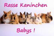 Süße Kaninchen Babys Zwergwidder Farbenzwerge