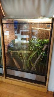 terrarium mit taggecko