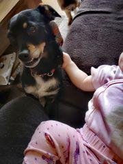 Kleiner Hund mit großem Herz