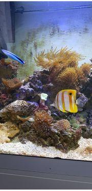 Meerwasser Aquarium komplett 450 l