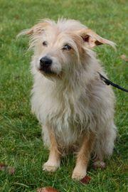 Ticco 10 Jahre - Mischling - Tierhilfe