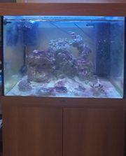 Meerwasser Aquarium komplett 200 L