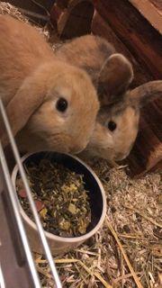 2 wunderschöne Kaninchen suchen neues