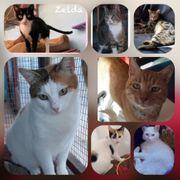 Wunderschöne Kitten Katzen Kater kastriert