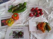 Paprikasamen verschiedene Sorten Bio Qualität
