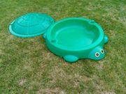 Grüne Sandkasten-Schildkröte