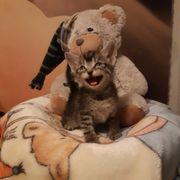 Katzenbabys suchen ein neues zu