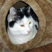 Kätzchen Ally sucht ihr Für-immer-Zuhause