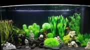 Aquarium Juwell 180 Liter