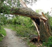 Sturmschaden Behebung und Aufräumarbeiten