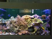 Meerwasseraquarium komplett Aqua Medic Magnifica
