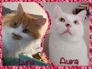 LUNA und oder AURA bei