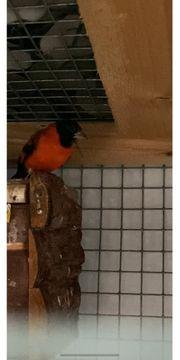 paar vogel mit käfig