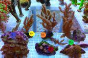 Meerwasser Korallen Update 1 4