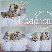 Babykatzen Kitten