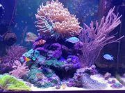 Juwel Lido 200 weiß Meerwasseraquarium