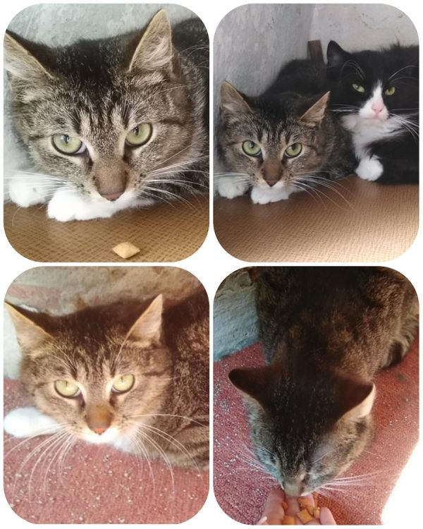 Katze Martha gerade 1 Jahr