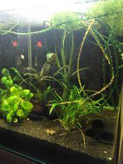 Nano Aquarium 30 l mit