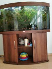 Aquarium Juwel Vision 260 komplett