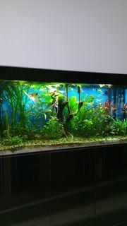 Haustierbedarf Aquarium Komplett Gebraucht Fische & Aquarien