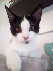 Babykatzen 19 Wochen alt