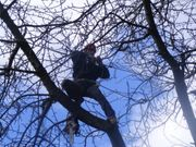 Baumschnitt Baumpflege Rodung