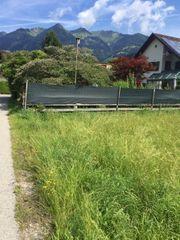 Sichtschutz grün ca 25 m