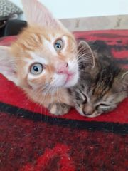 Katzenbub Alani sucht liebevolles Zuhause