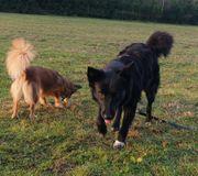 Hündin Jenny sucht hundeerfahrene Menschen