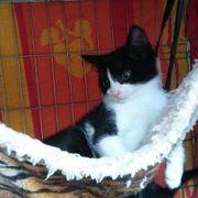 Katzenbub Kenai hat seinen Koffer