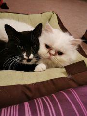 Katze oder Kater als Spielgefährten