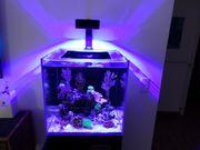 Meerwasseraquarium Blue Marine Reef 125