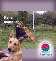Kenai - was bist du für