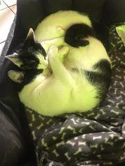 Süßes Katzenpaar sucht gemeinsam ein