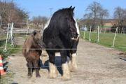 Ponyplatz bis 1 20 m