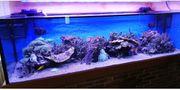 1100 ltr Aquarium zu verkaufen