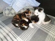 Jünge Kätzchen ab 25 10
